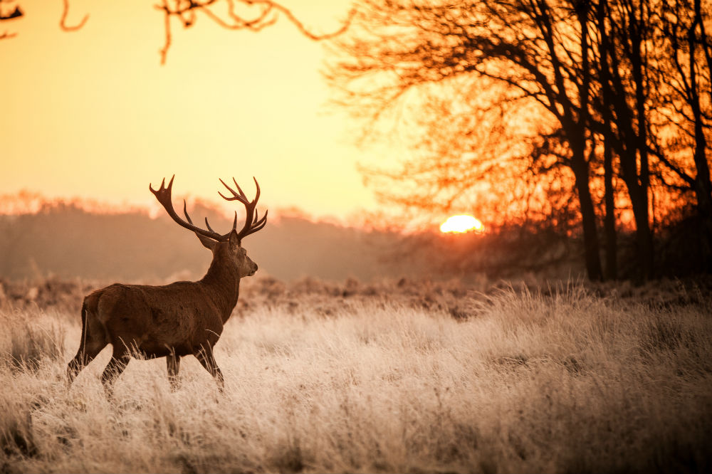 Best Bow Sights for Deer Hunting